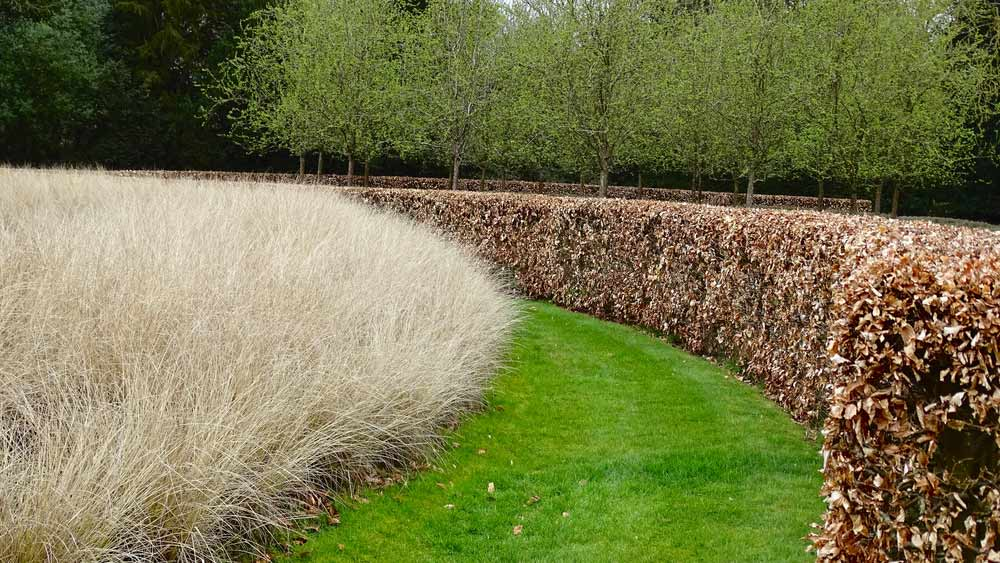 best time to prune copper beech hedge