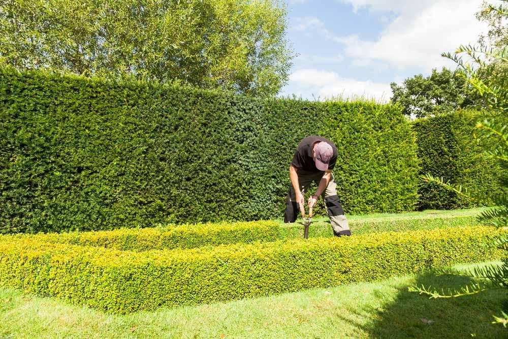 garden hedge maintenance